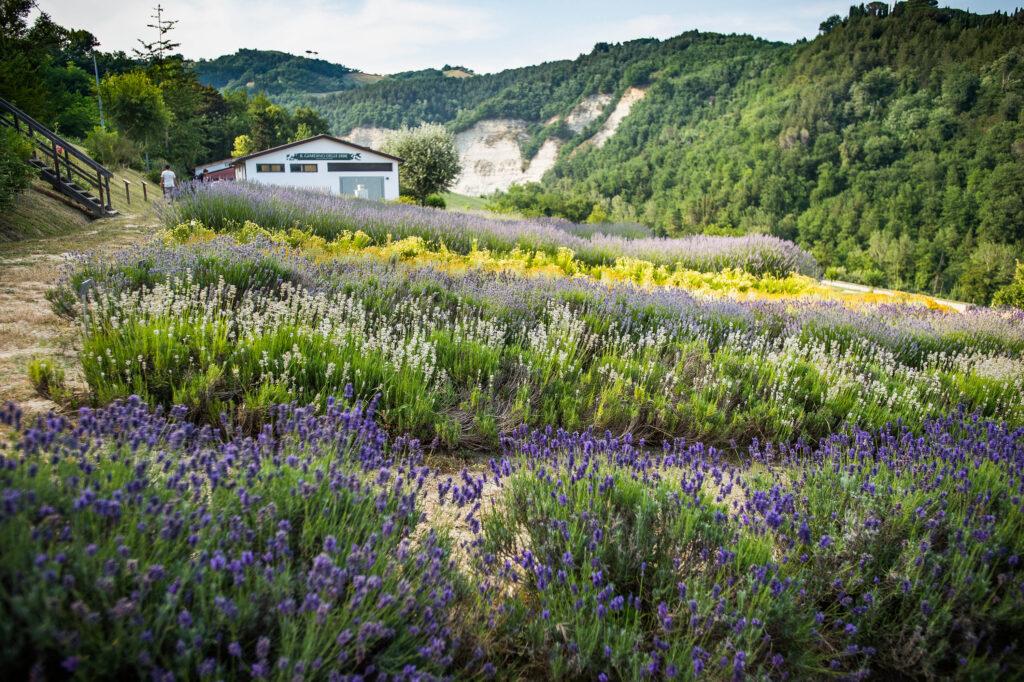 giardino-delle-erbe-ceroni-casola-valsenio